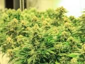 Vortrag:  Cannabiskonsum  bei Jugendlichen -